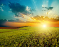 Sunset and green agriculture field Royalty Free Stock Photo