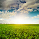 Sunset and green agricultute field Stock Images