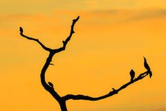Sunset at Green Cay Wetlands Royalty Free Stock Photo