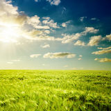 Sunset and green field Royalty Free Stock Images