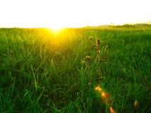 Sunset and green field. Setting sun in summer. Photo taken in a green field royalty free stock photos