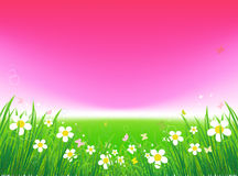 Sunset on green field, summer background. Illustration Royalty Free Stock Image