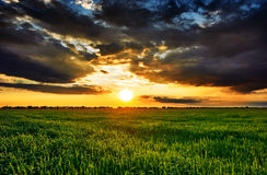 Sunset in green field, summer landscape, bright colorful sky and clouds as background Royalty Free Stock Photography