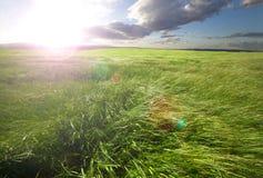 Sunset green fields Stock Photography