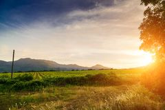 Sunset vineyards. In the distance mountains. Sunset green vineyards. In the distance mountains Stock Photography