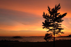 Sunset on Gulf of Finland. Tree on a background of a sunset royalty free stock photos