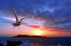 Sunset with gull. A wonderful sunset with a gull flyng Royalty Free Stock Image