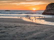 Sunset with gulls on beach Royalty Free Stock Photography