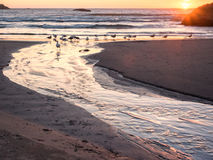 Sunset with gulls on beach Royalty Free Stock Photos