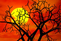 Sunset in haloween day. Red sunset in haloween day Stock Photo