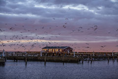 Sunset at harbor Stock Images