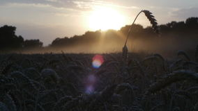 Sunset harvest on fields 3 stock footage