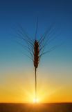 Sunset and harvest Royalty Free Stock Photography
