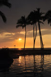Sunset in hawaii. Beautiful sunset with palm tree and infinite pool Stock Image