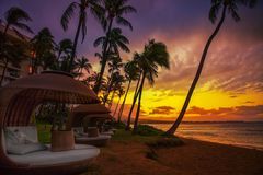 Sunset in hawaii. An resort with palm trees Stock Photography