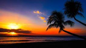 Hawaiian sunset. Sunset in Hawaii with twi palm trees and orange sky Stock Photos