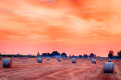 Sunset on hay bales. Blue hour of sunset on round hay bales in a harvested field , rural and bucolic atmosphere of a hot summer day Stock Photography
