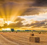 Hay bales drying in Italian country fields. Sunset on hay bales drying in Italian country fields royalty free stock photos
