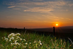 Sunset Hebden Yorkshire. UK flowers roadside stock image