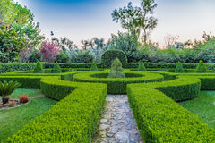 sunset on the hedges of an Italian garden Stock Images