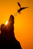 At sunset. Heron takes off from the mound at sunset Royalty Free Stock Image