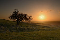 Sunset on the Hill. Sunset on the Dragon Hill, oxfordshire Stock Photography