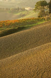 Sunset hills. A chianti road at sunset royalty free stock image