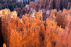 Sunset Hoodoos of Bryce Canyon Stock Images