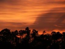 Sunset horizon. Orangey sky with a silhouette of trees as the horizon stock image