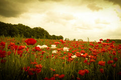 Sunset in horizon covering field of wild flowers stock photo