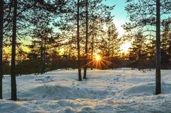 Sunset in the horizon through the woods stock photo