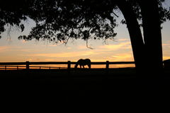 Sunset Horse. A horse on in a field at sunset Stock Photography