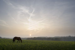 Sunset with horse. Horse on the meadow during the sunset Royalty Free Stock Image
