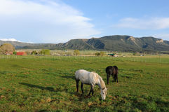 Mountain Ranch. Sunset at a horse ranch in the Rockies Stock Image