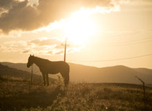 At sunset Royalty Free Stock Photography