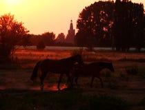 Sunset horses. Horses walking in warm sunset light stock photo