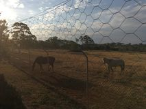 Sunset horses stock photos