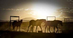 Sunset with horses Royalty Free Stock Photo