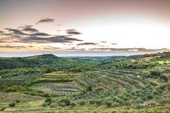 Sunset at a idyllic vineyard at the farmland of Istria, Croatia. Sunset at a idyllic green vineyard at the farmland of Istria, Croatia royalty free stock photos