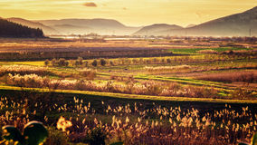 Sunset illuminates the fertile fields and lot of vegetation Stock Images