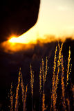 Sunset illumination. Sun setting between rock and ground, thereby illuminating grass blades; at Devils Marbles, Australia Stock Photo