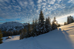 Sunset In Austrian Alps With Last Sunbeams Through Trees Royalty Free Stock Photos