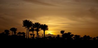 Free Sunset In Mountings With Palms. Winter Evening With Palms. Yellow Sun Down And Sky. Stock Photo - 111339240
