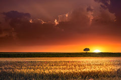 Sunset In The Agricultural Areas Royalty Free Stock Image