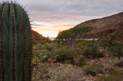 Free Sunset In The Mexican Desert Royalty Free Stock Photography - 36194647