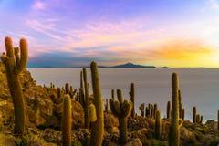 Sunset on Incahuasi island by Uyuni lake in Bolivia Stock Images