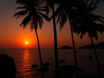 Sunset in India. Sunset between palms and ocean from a beach in Palolem, India Royalty Free Stock Photos