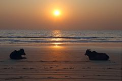 Sunset at an indian beach Royalty Free Stock Images