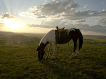 Sunset at in Inner Mongolia grassland Stock Photography