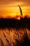 Sunset intentionally blurred Royalty Free Stock Photo